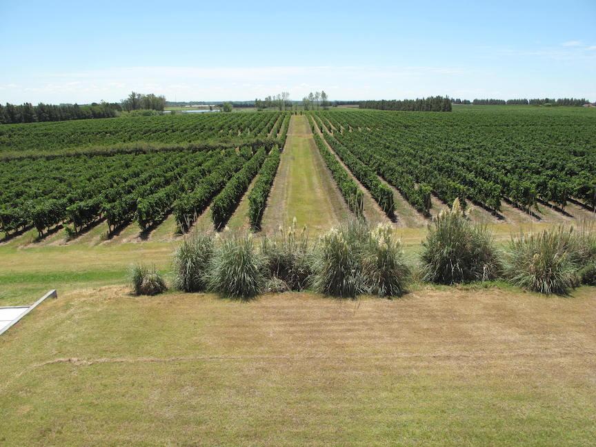 Wein aus Uruguay Bodegas Juergen Kagelmann 08
