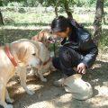 tricastin_bettina_haase_06_-drome-trueffelhunde