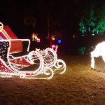 Botanischer_Garten_Berlin_Christmas_Garden